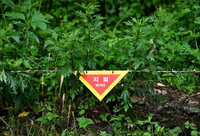 강원도 철원군 육군3사단 백골OP 인근의 작전도로 주변에 설치된 지뢰 위험 경고 표지판.