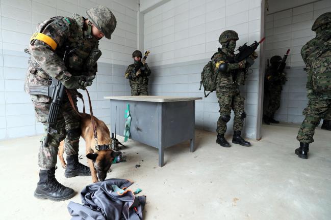 군견훈련소 탐지견이 폭발물 탐지작전을 벌이고 있다.  사진=한재호 기자